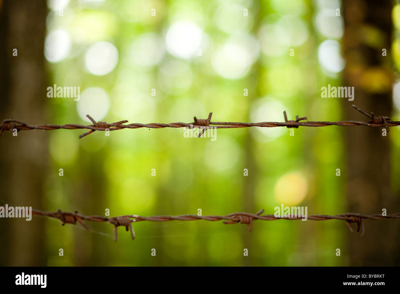 Close up of rusty barb wire over green background - Stock Image