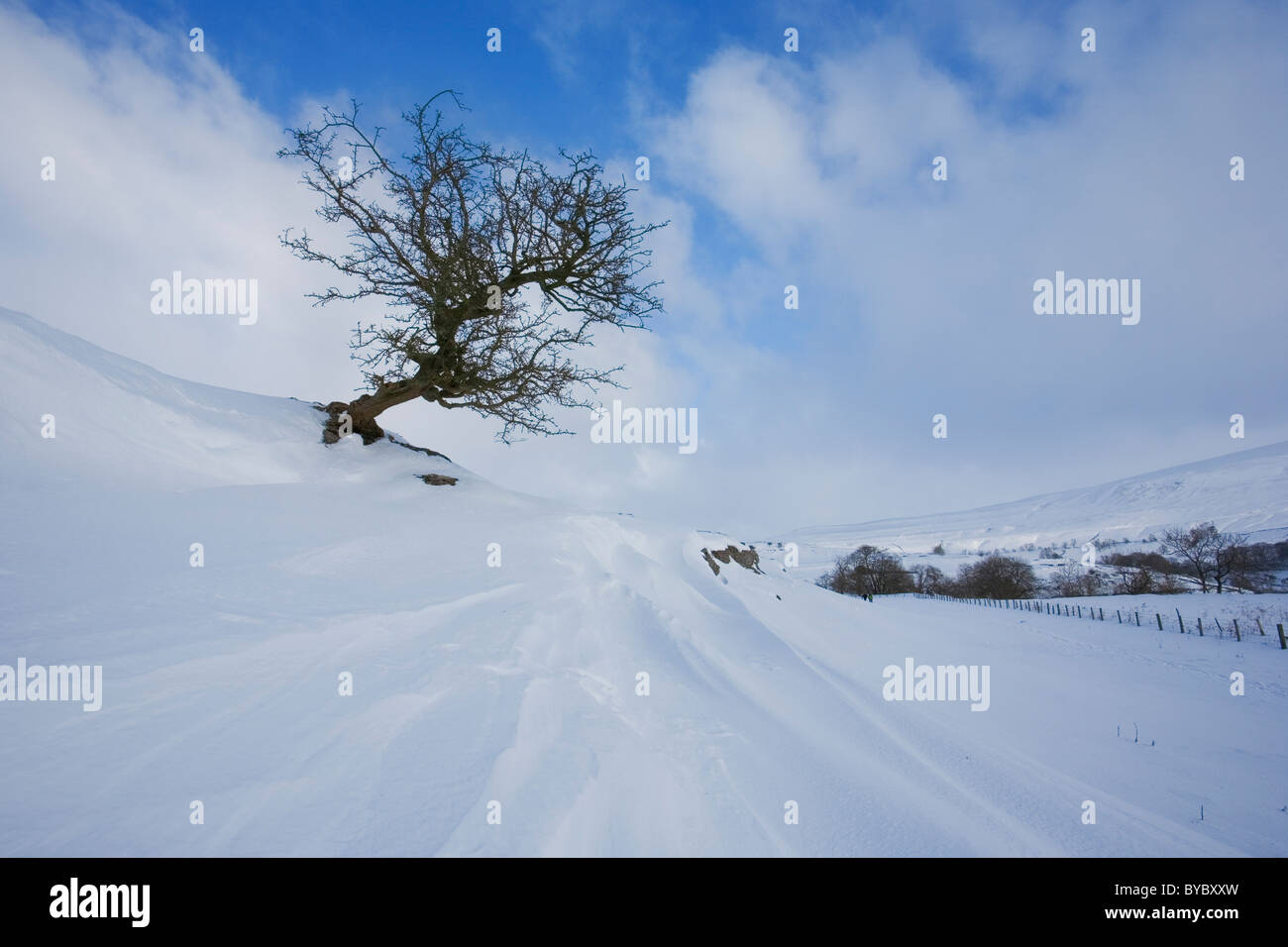Lone Hawthorn Tree and Crisp fresh Snow Drifts at Langstrothdale, Yorkshire Dales, UK - Stock Image