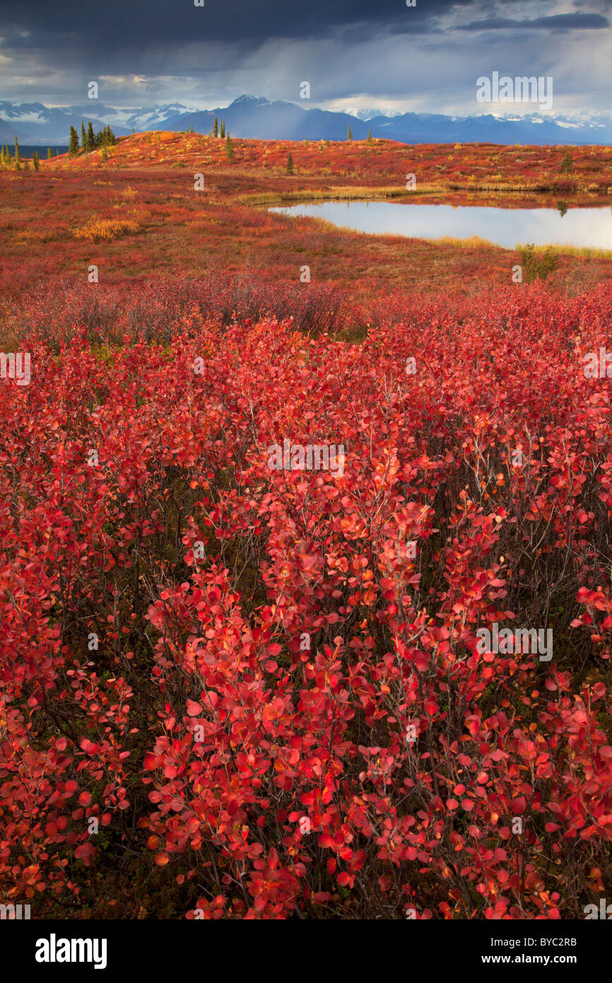 Denali Highway, Alaska. - Stock Image