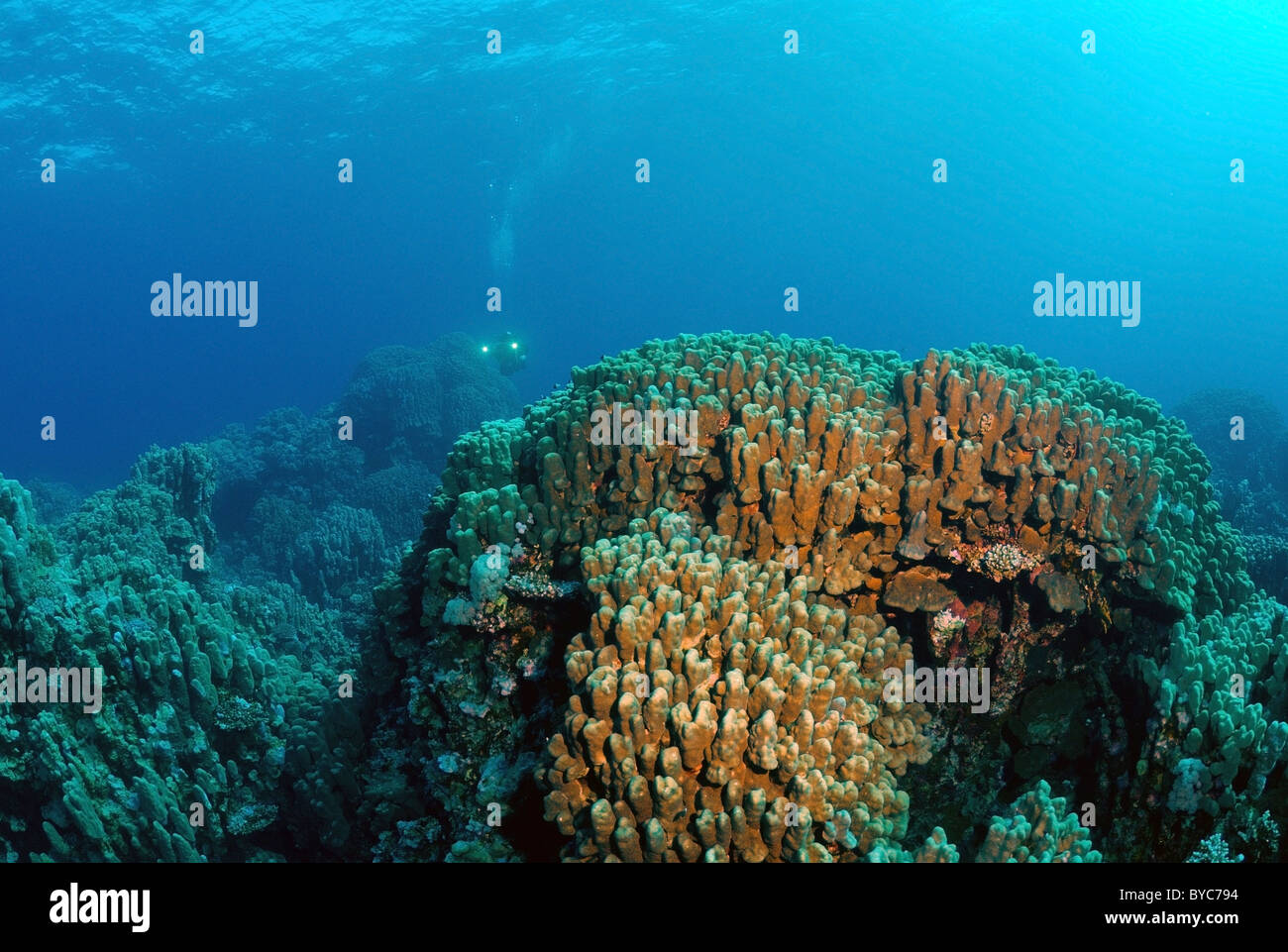 The coral reef - Stock Image