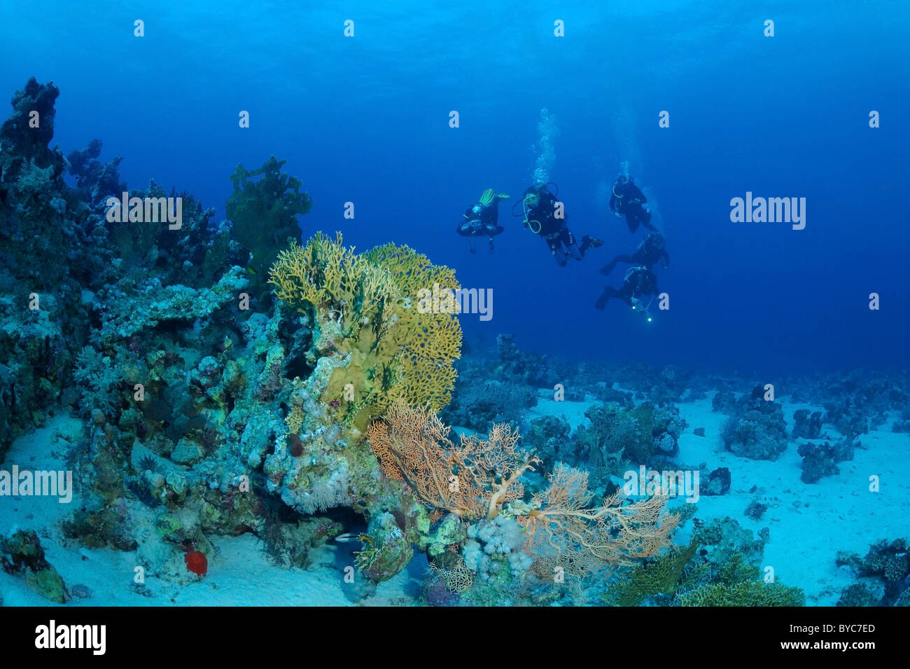 Group of scubadivers swim near coral reef Stock Photo