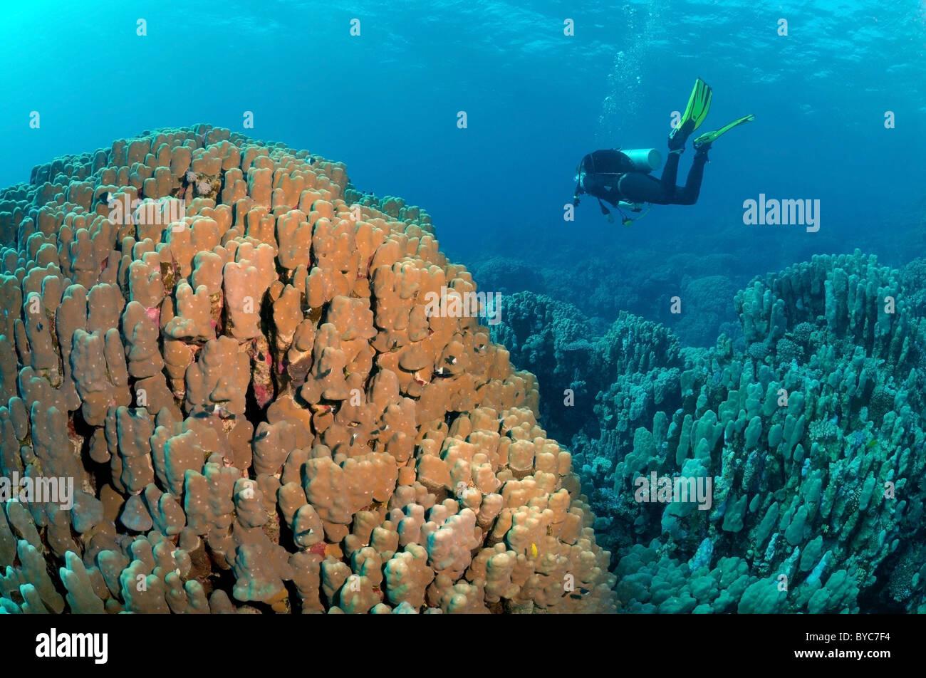 Scuba diver swim in the blue water near beautiful coral reef Stock Photo