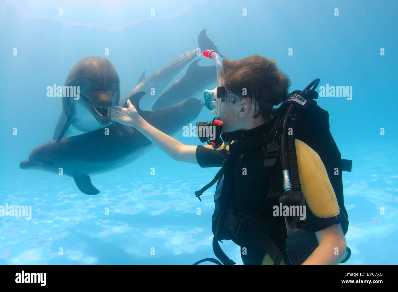 young scubadiver and two Bottlenose Dolphin, (Tursiops truncatus)  in delphinarium - Stock Image