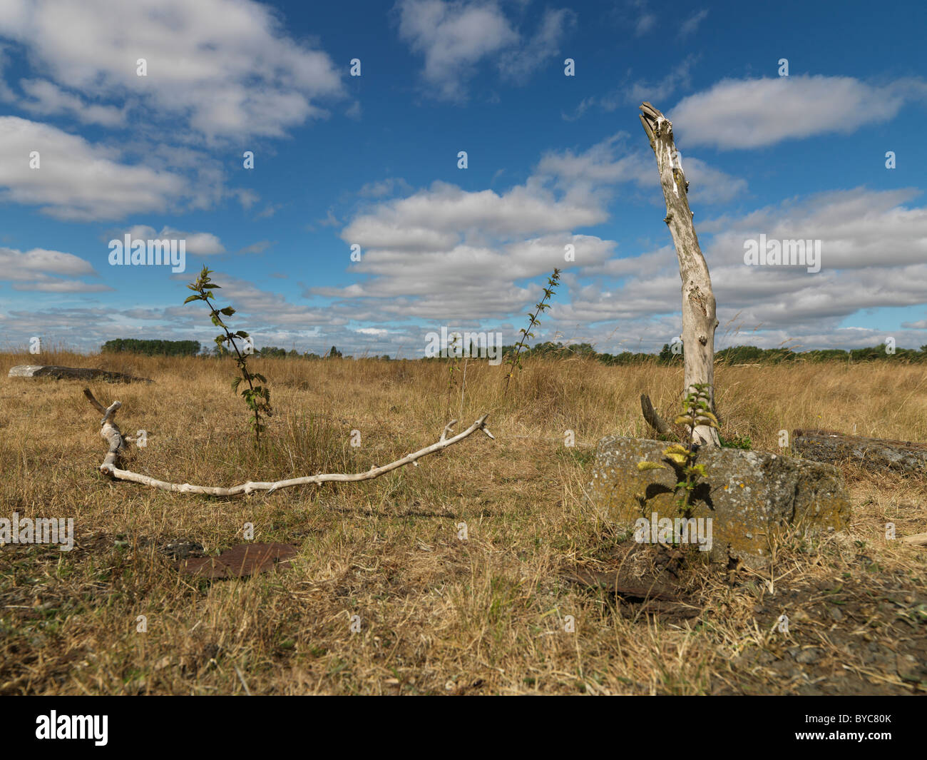Rural wasteland dead tree branch - Stock Image