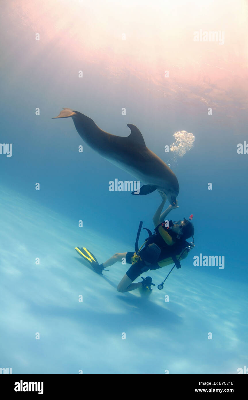 young scubadiver and Bottlenose Dolphin, (Tursiops truncatus) in delphinarium - Stock Image