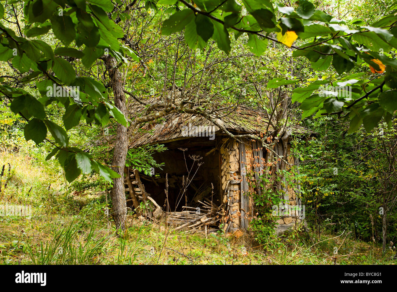 Old abandoned ruined barn in the forest - Stock Image