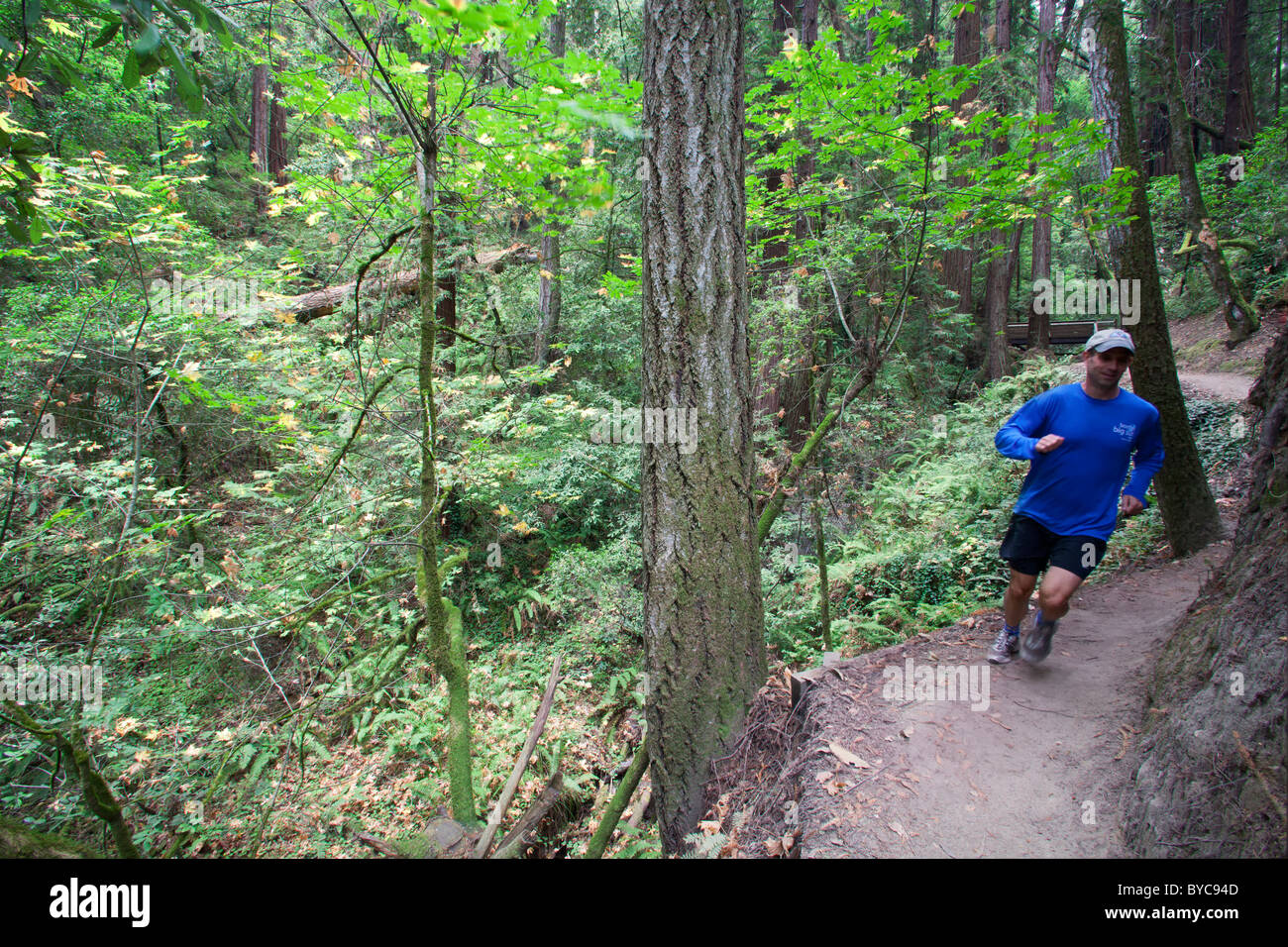 Trail running in The Forest of Nisene Marks State Park, Aptos, California - Stock Image