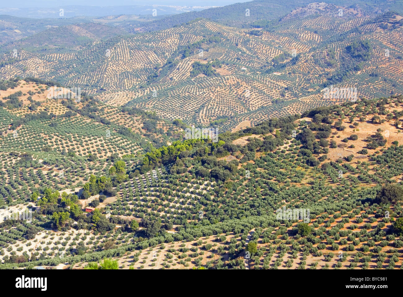 Olive groves in Jaen Province, Andalucia, Spain. Stock Photo