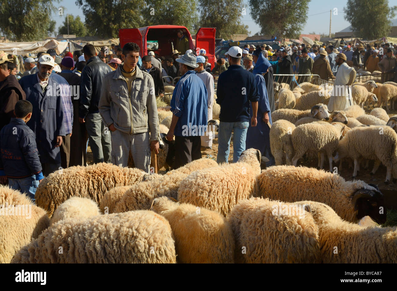 Crowded sheep market at Ait Ourir Morocco for sacrifice at Muslim Eid Al Adha feast - Stock Image
