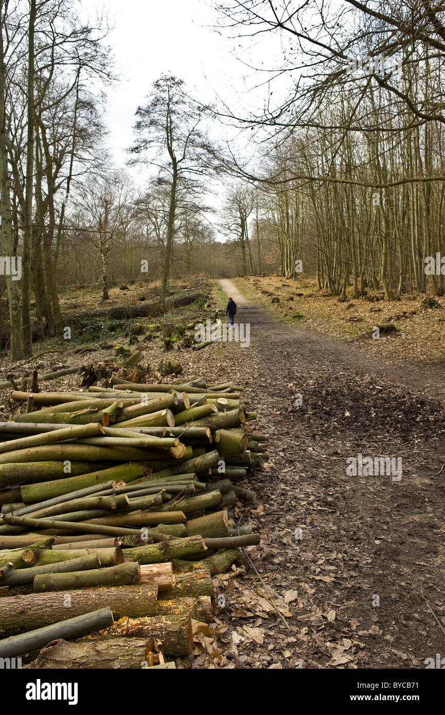 Norsey Woods Essex - Logs stacked at the side of a path in Norsey woods in Essex. - Stock Image
