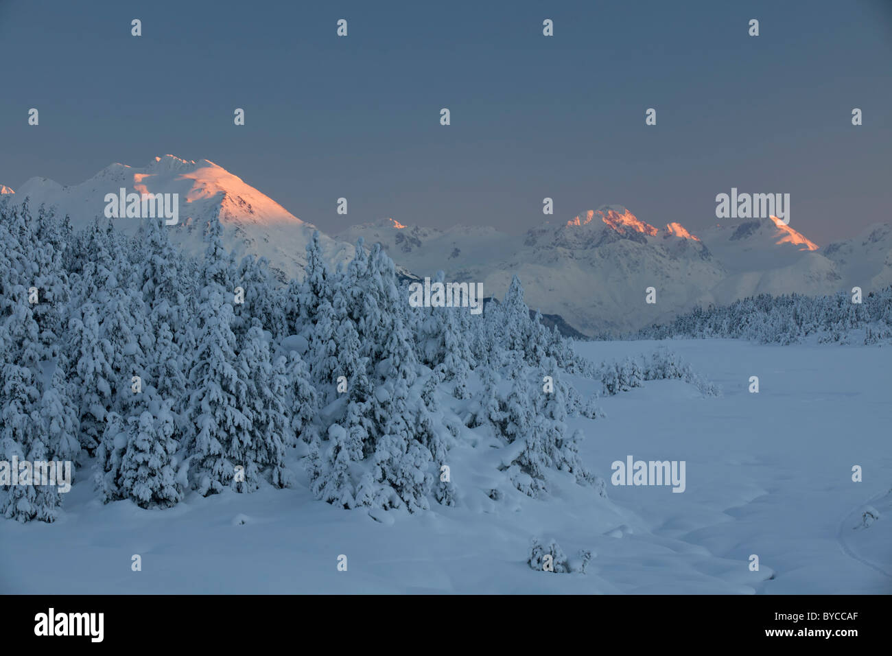 Snow trees in Turnagain Pass, Chugach National Forest, Alaska. - Stock Image