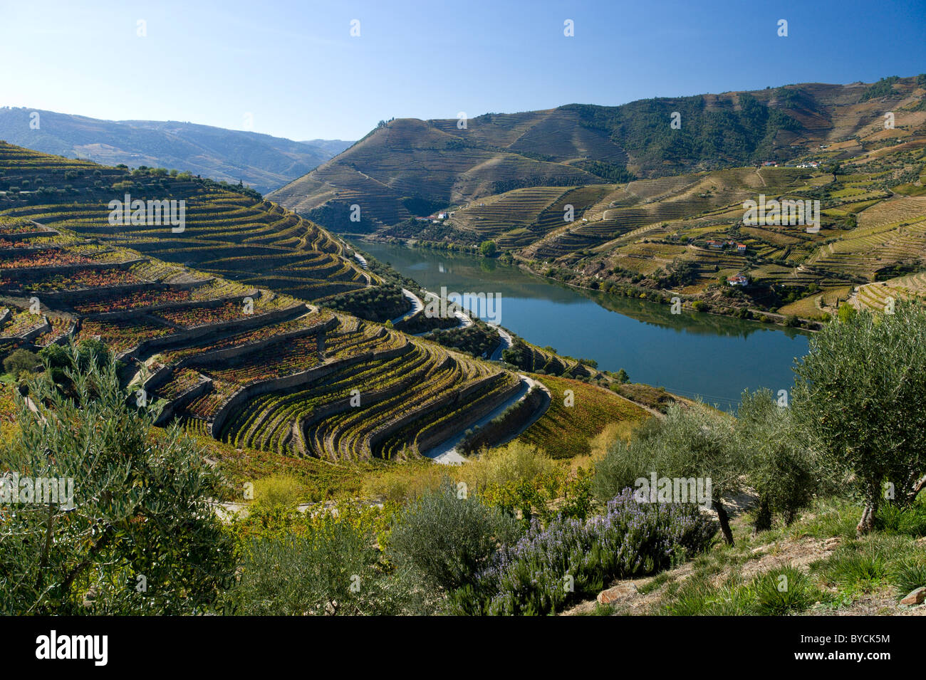 Portugal, the Alto Douro, vineyards and the river, near Regua - Stock Image
