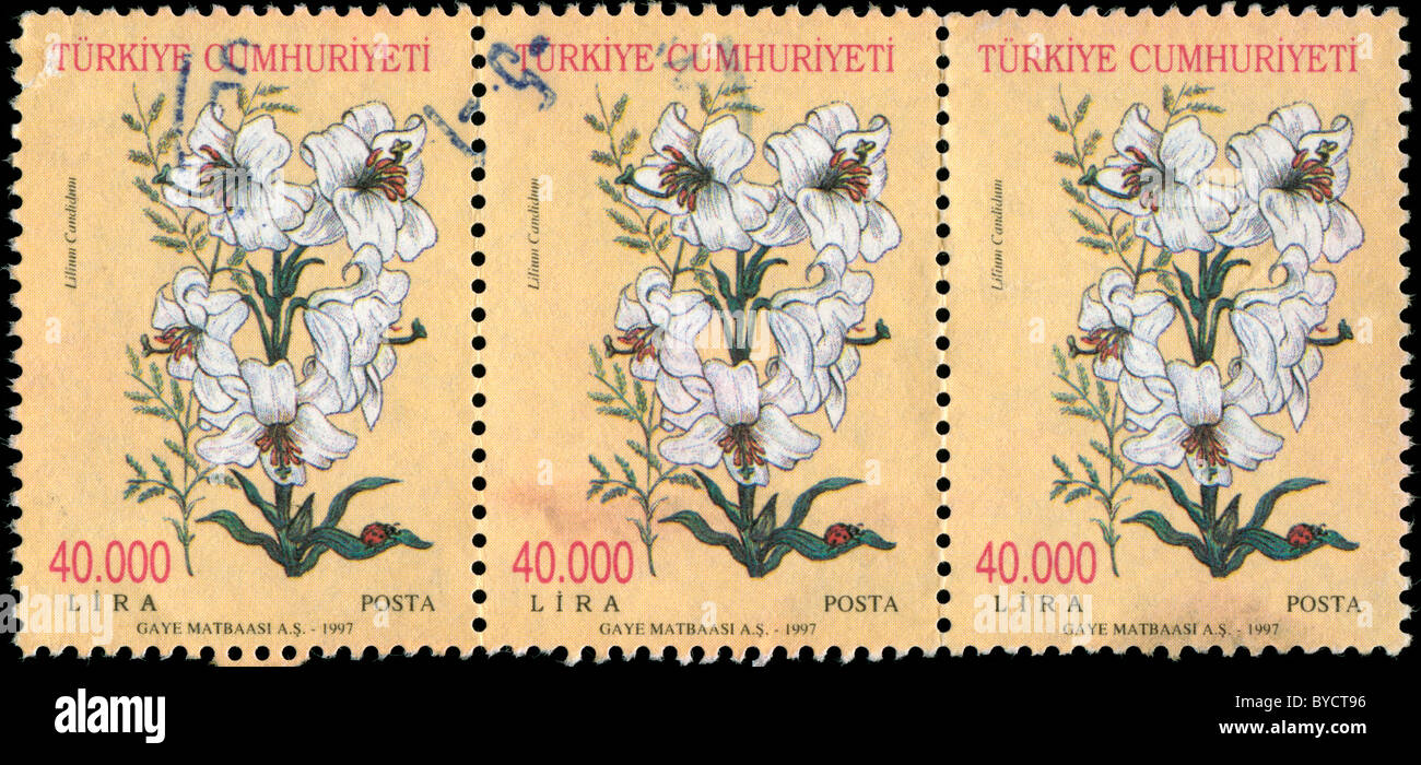 Sheet of three stamps from Turkey with drawing of a Madonna Lily Stock Photo