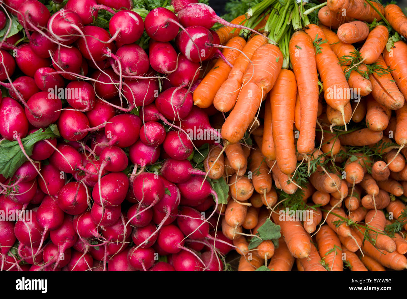Radishes and carrots on vegetable market stall - Stock Image