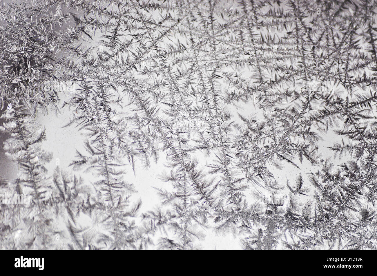 frozen ice crystals on a window - Stock Image