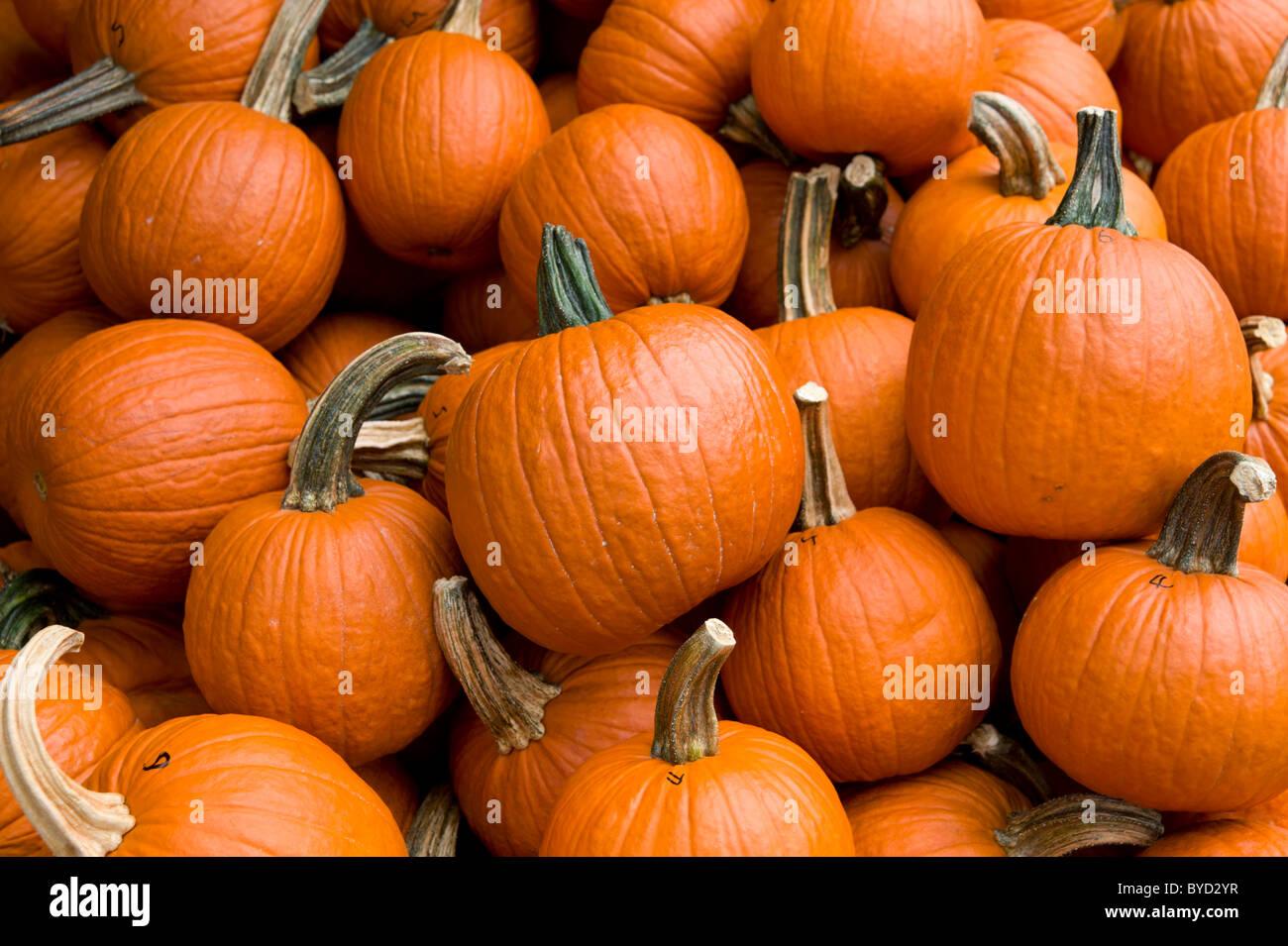 Pumpkins, USA - Stock Image