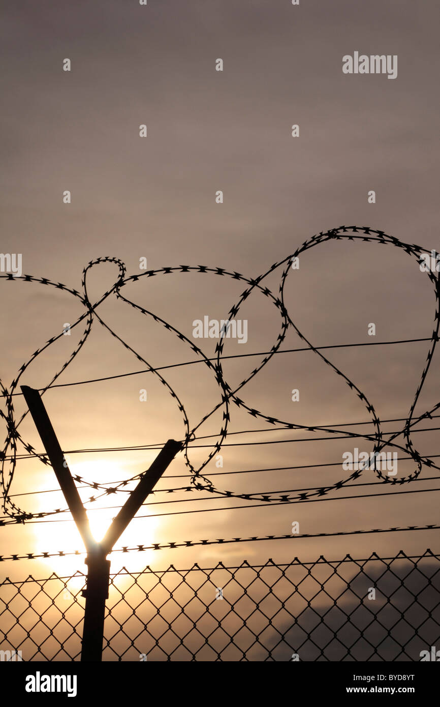 Barbed wire fence, backlit - Stock Image