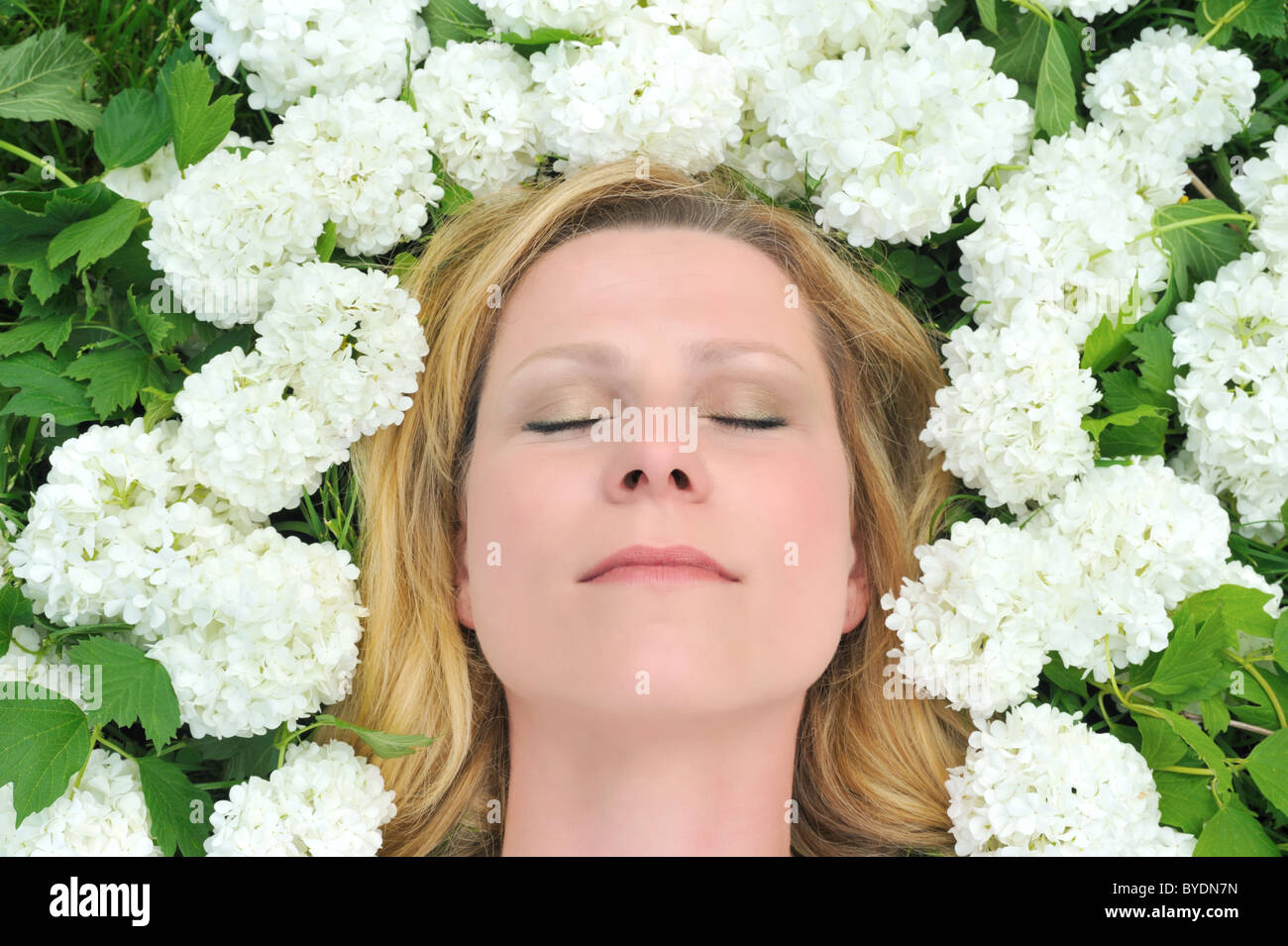 Young woman laying in flowers - snowballs Stock Photo
