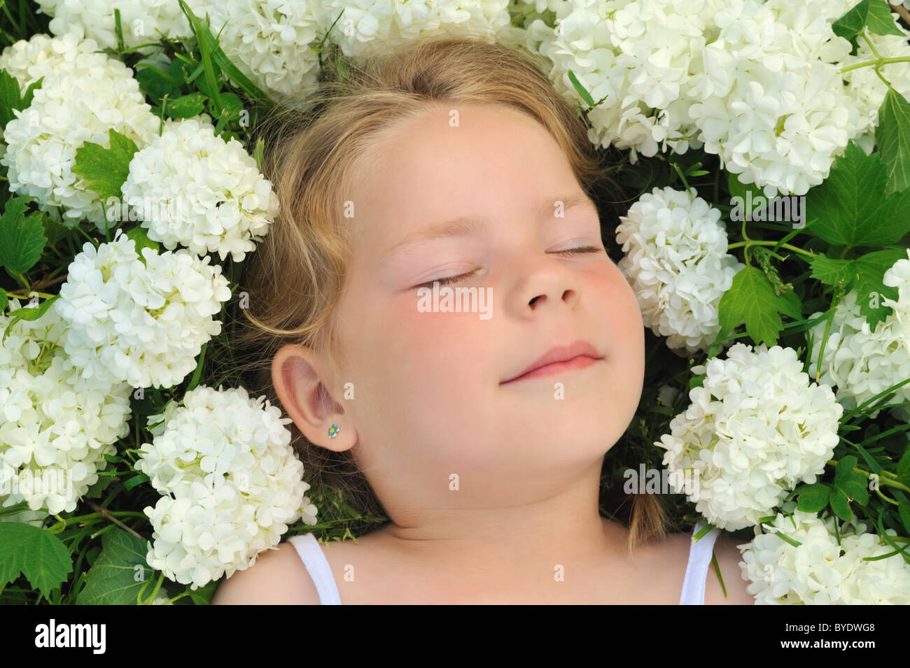Little girl laying in flowers - snowball Stock Photo