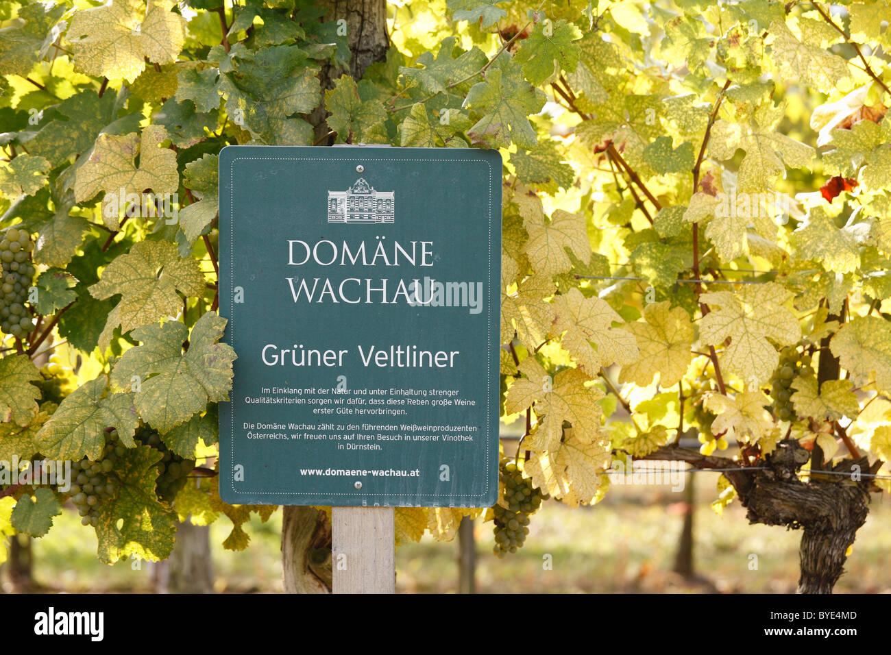 Sign, Domain Wachau Gruener Veltliner grapes in a vineyard, Wachau, Waldviertel, Lower Austria, Austria, Europe - Stock Image