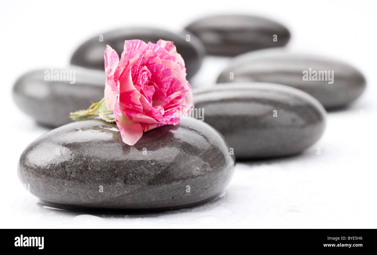 Spa stones with rose flower on a white background. - Stock Image