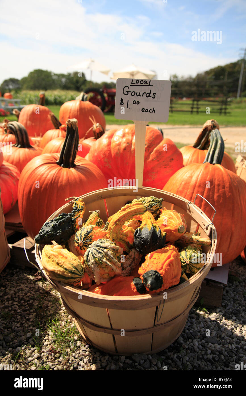 Organic gourds and pumpkins for sale at local farm stand in New York on the east end of Long Island - Stock Image