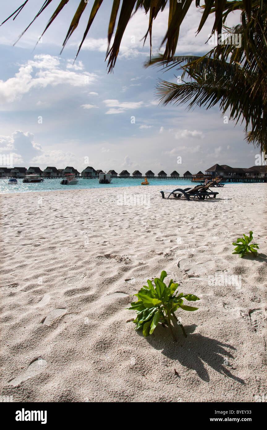 grand centara island maldives white sands blue sky turquoise sea honeymoon palm tree growing in the beach - Stock Image