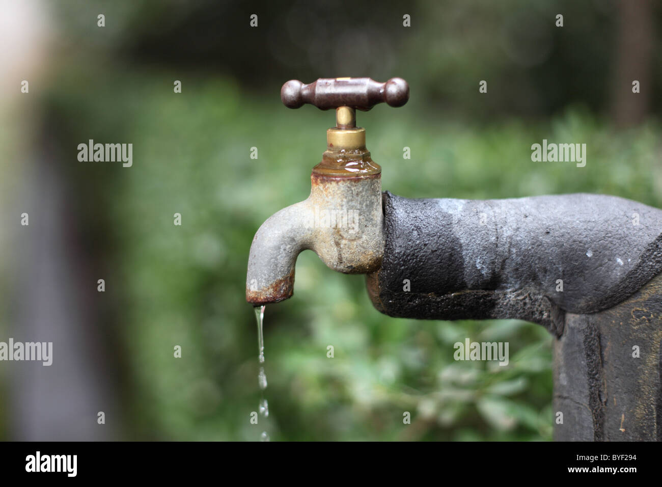 Old water tap in the garden - Stock Image