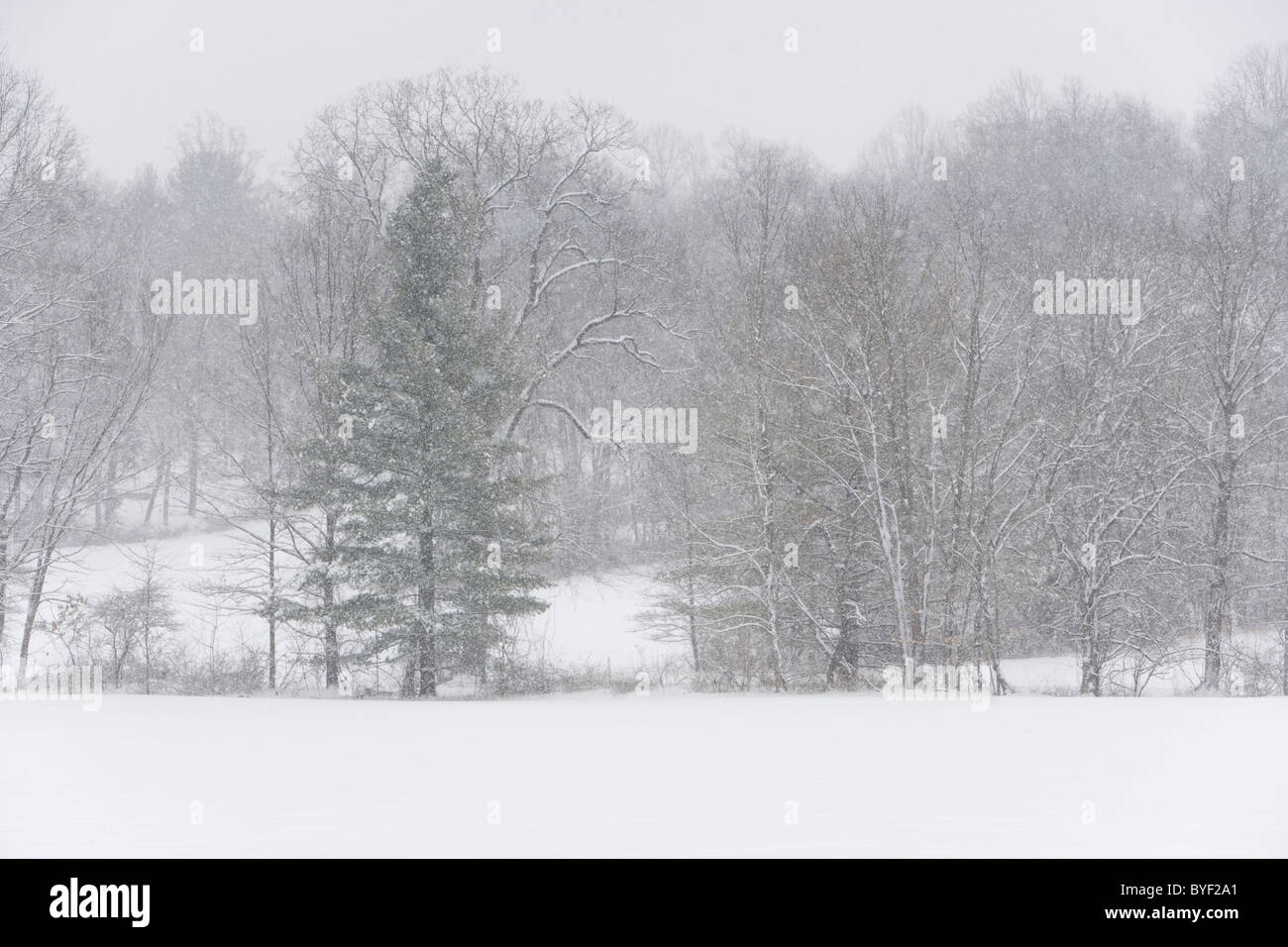 Snow comes down on a field a and line of trees. - Stock Image