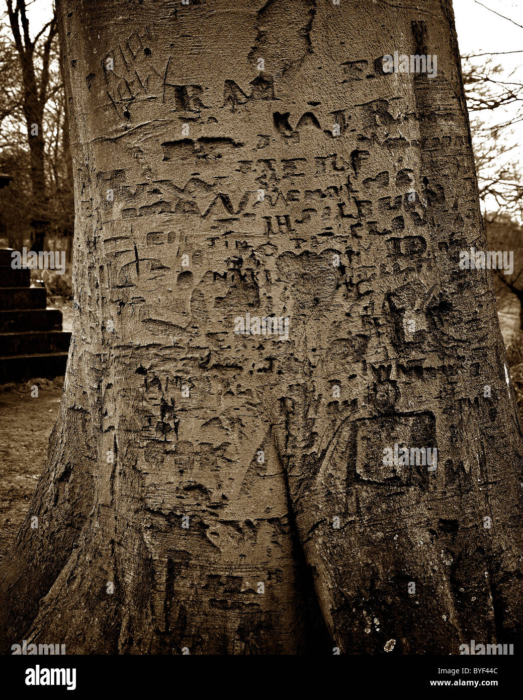 Dunham Massey National Park tree names carving lover lovers love - Stock Image