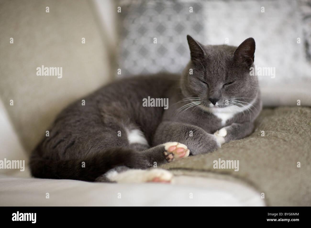 Cat sleeping on sofa - Stock Image