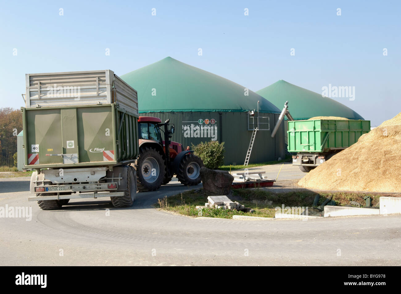 Maize, Corn (Zea mays). Fresh chopped maize being brought to an anaerobic digester plant. - Stock Image