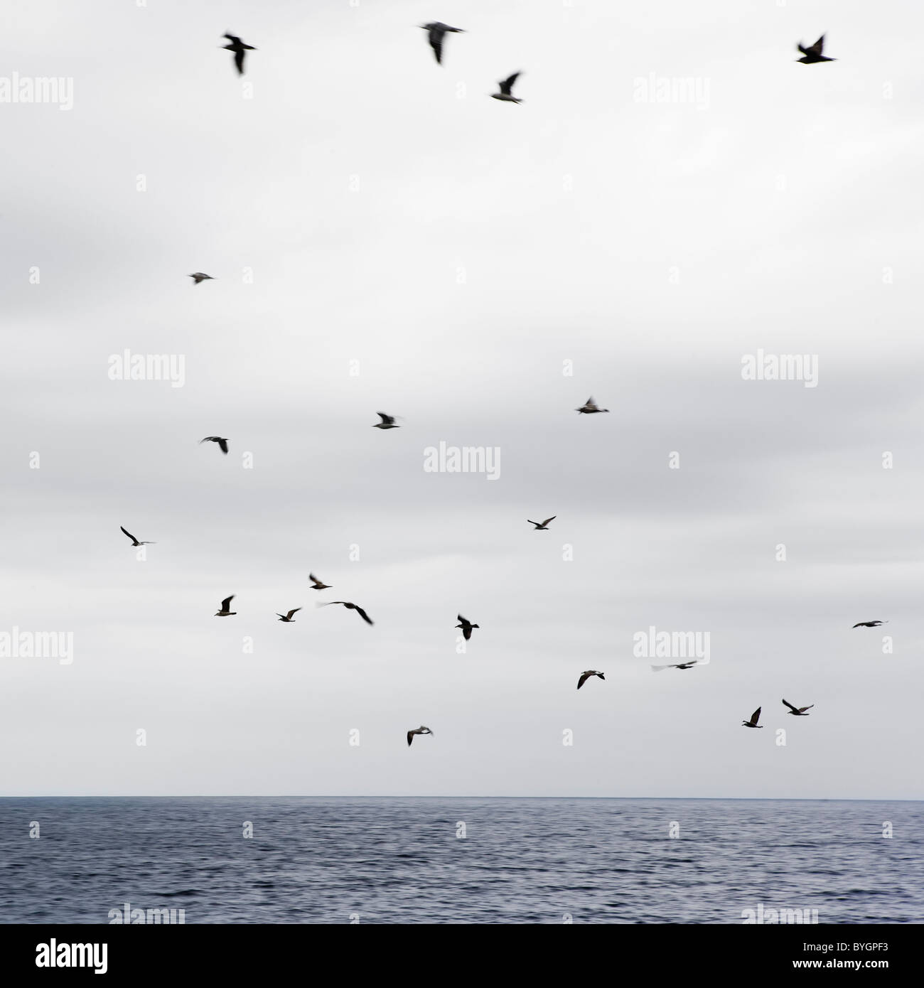 Seagulls flying over sea Stock Photo