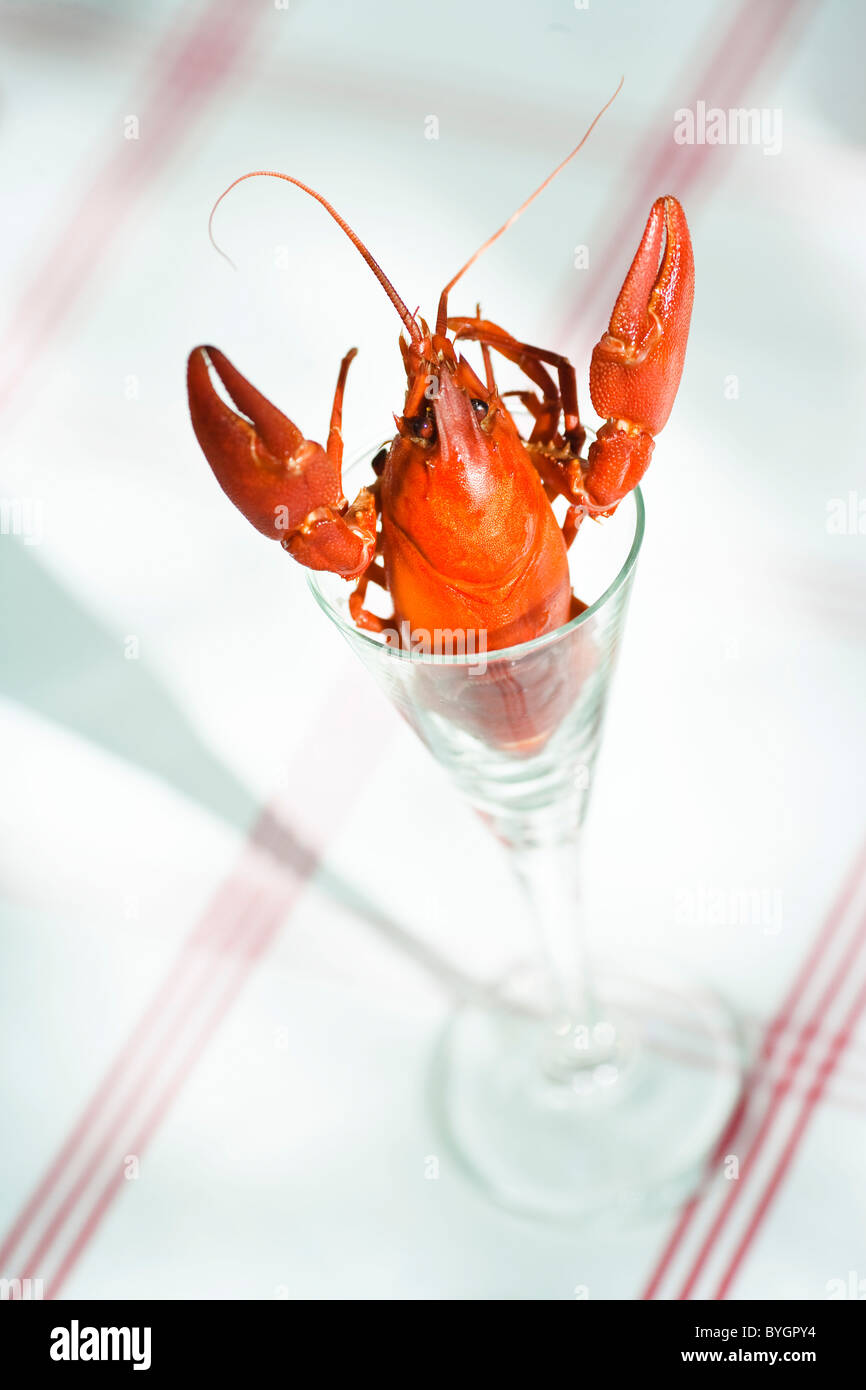 Crayfish in glass - Stock Image