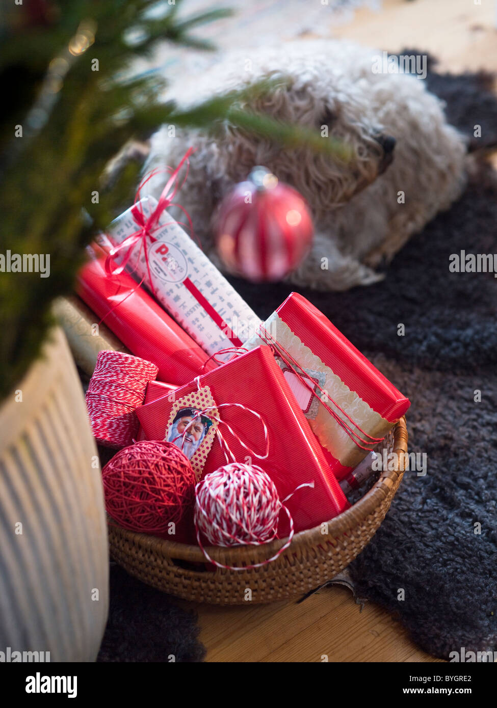 Christmas presents in basket with dog lying on background - Stock Image