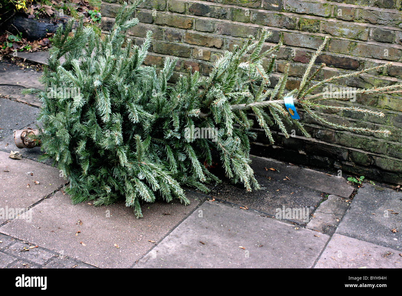 Discarded Christmas tree on a London street in January ...