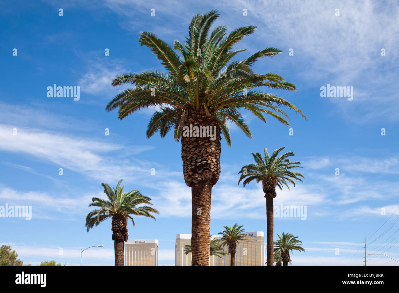 las vegas palm trees stock photos las vegas palm trees stock