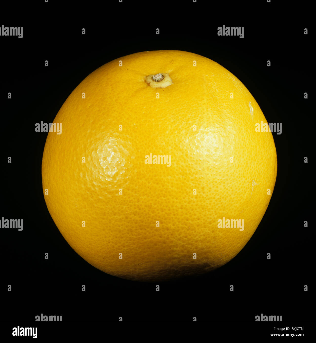 Whole citrus fruit grapefruit variety Marsh Seedless - Stock Image