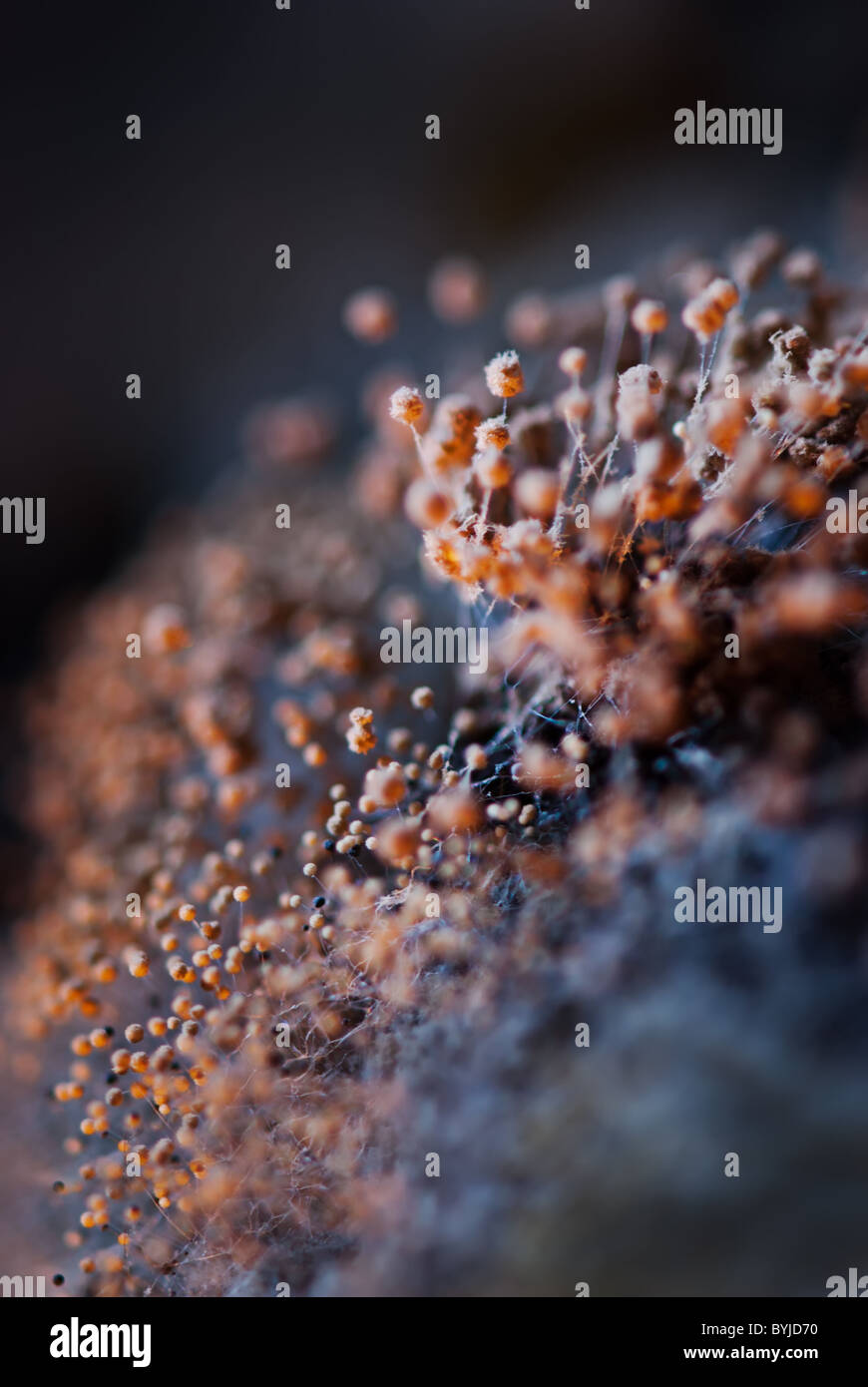 Extreme close up of mildew at bread over texture strengthening special lighting - Stock Image