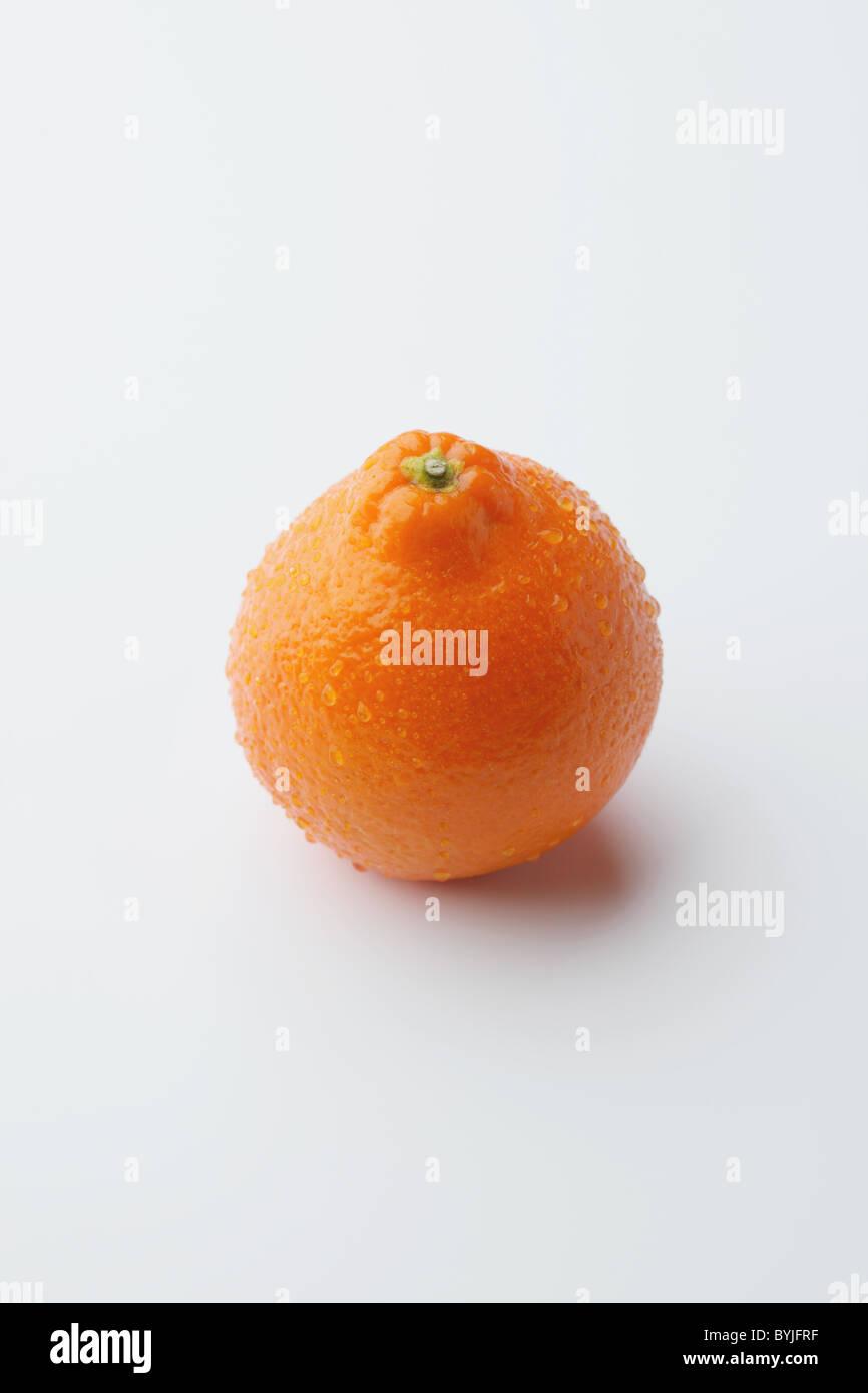 Mineola Orange - Stock Image