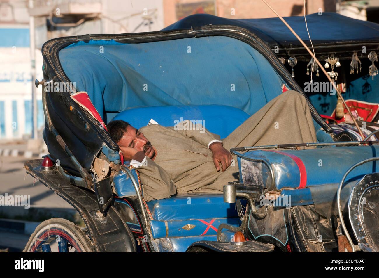 Aegypten, Luxor, schlafender Kutscher - Stock Image
