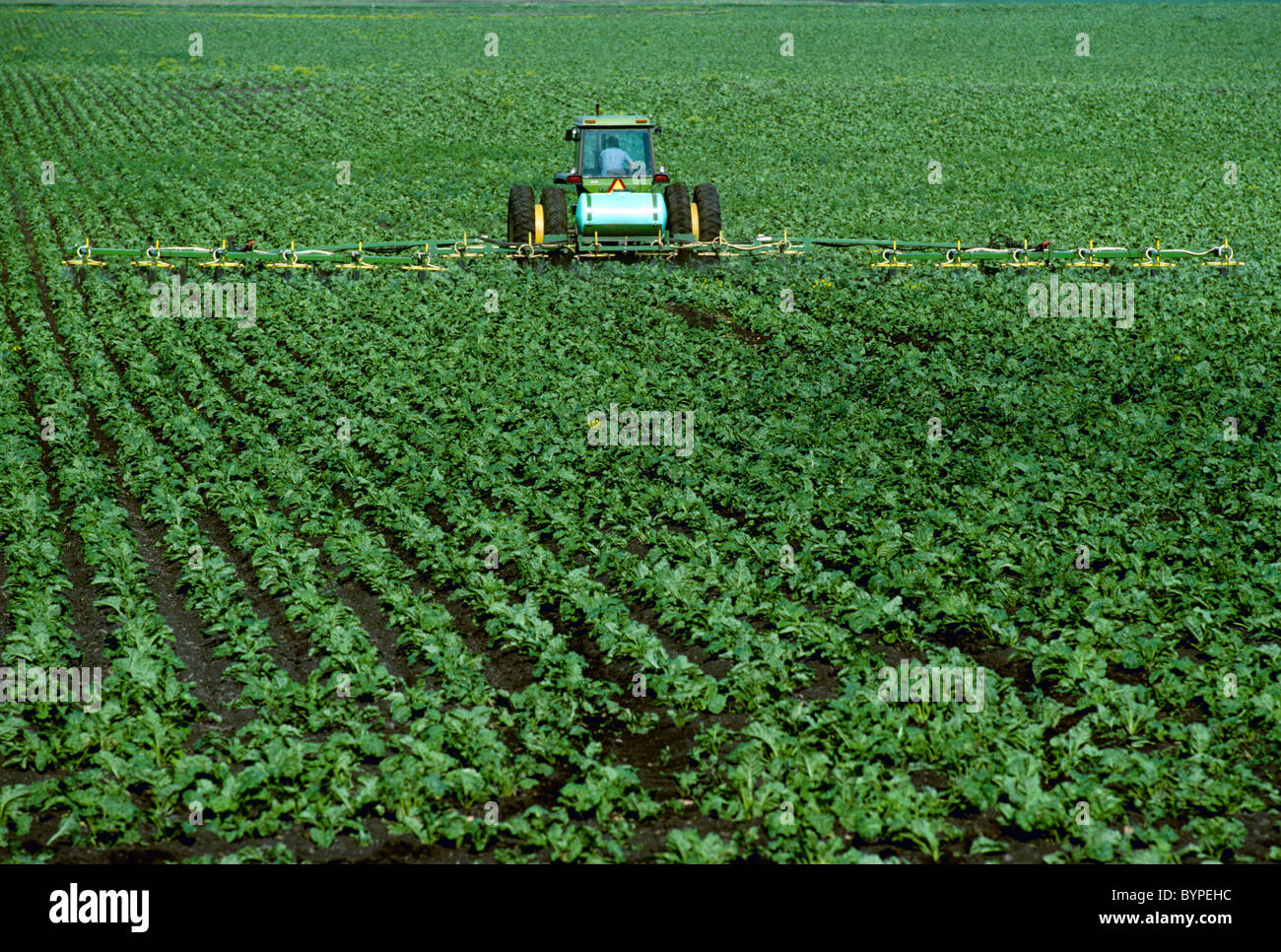 Agriculture - Herbicide application to an early growth sugar