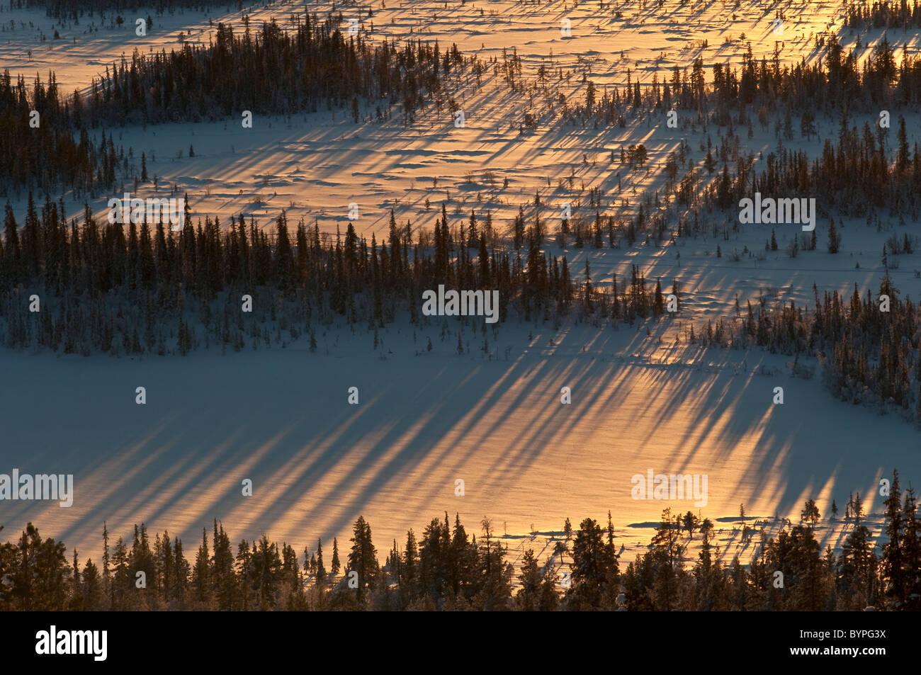 Baeume mit Schattenwurf, Sjaunja Naturreservat, Welterbe Laponia, Lappland, Schweden - Stock Image