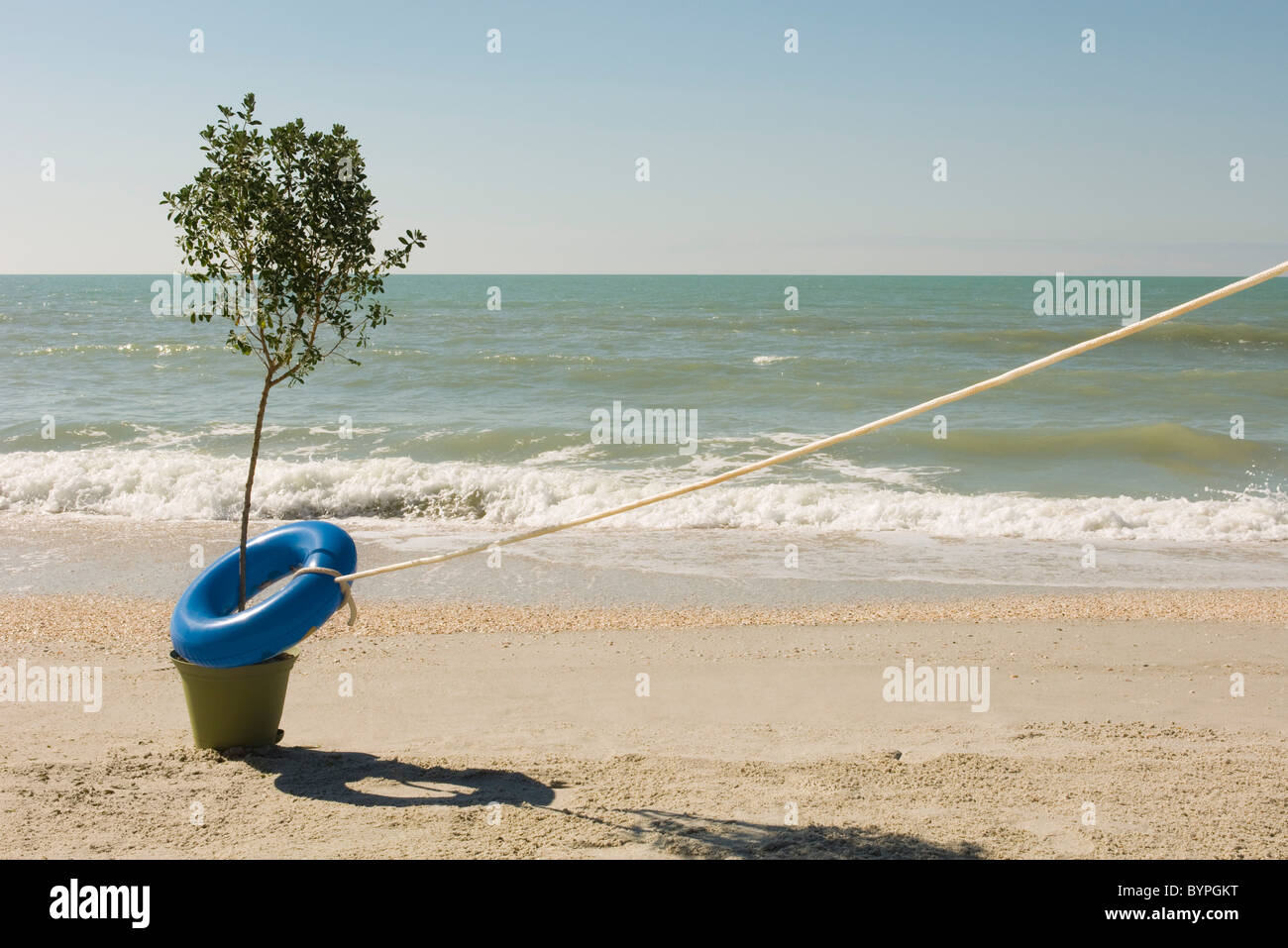 Rope attached to life belt encircling tree growing at water's edge on beach - Stock Image
