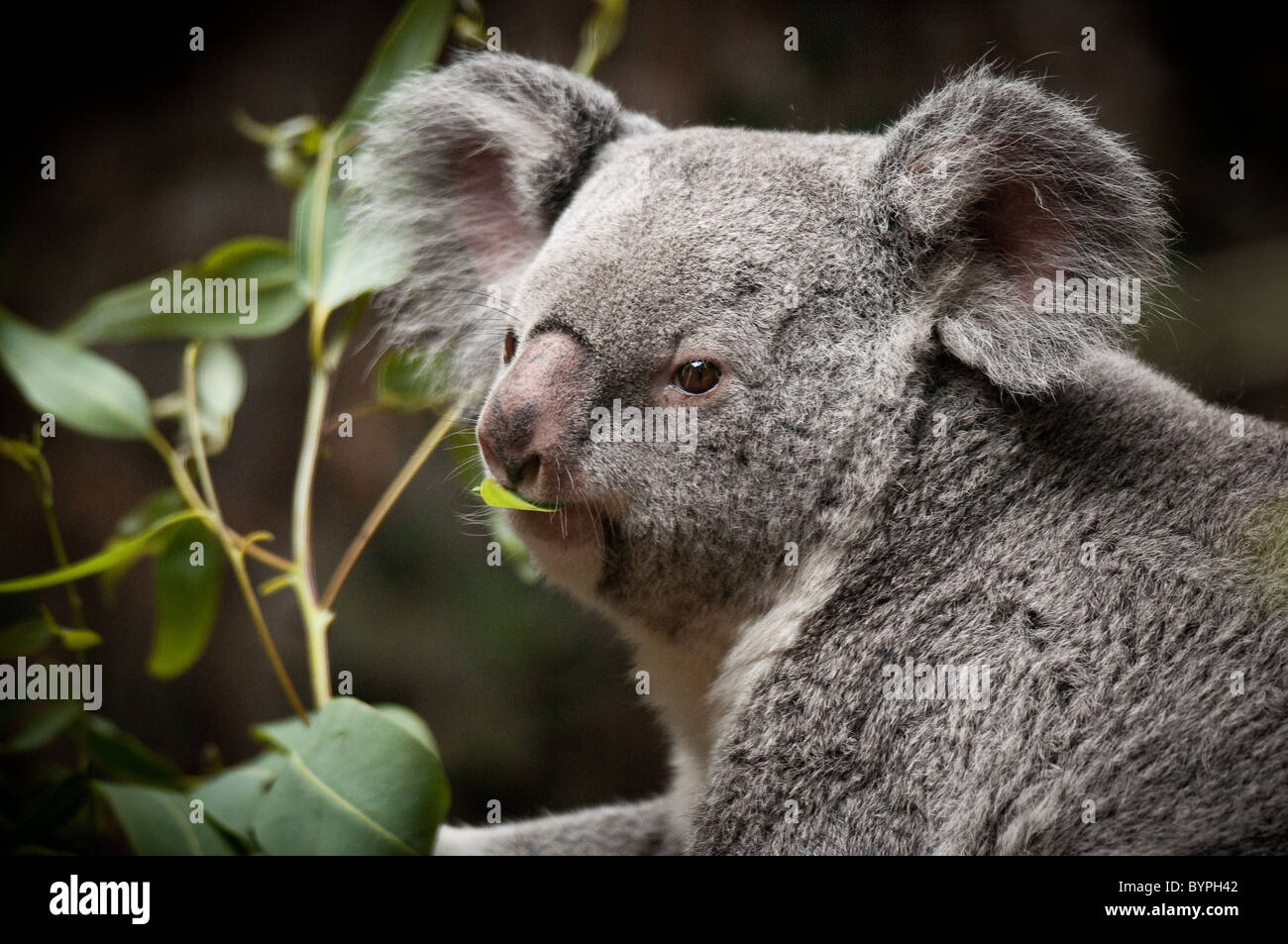 Feed Bear Zoo Stock Photos Feed Bear Zoo Stock Images Alamy