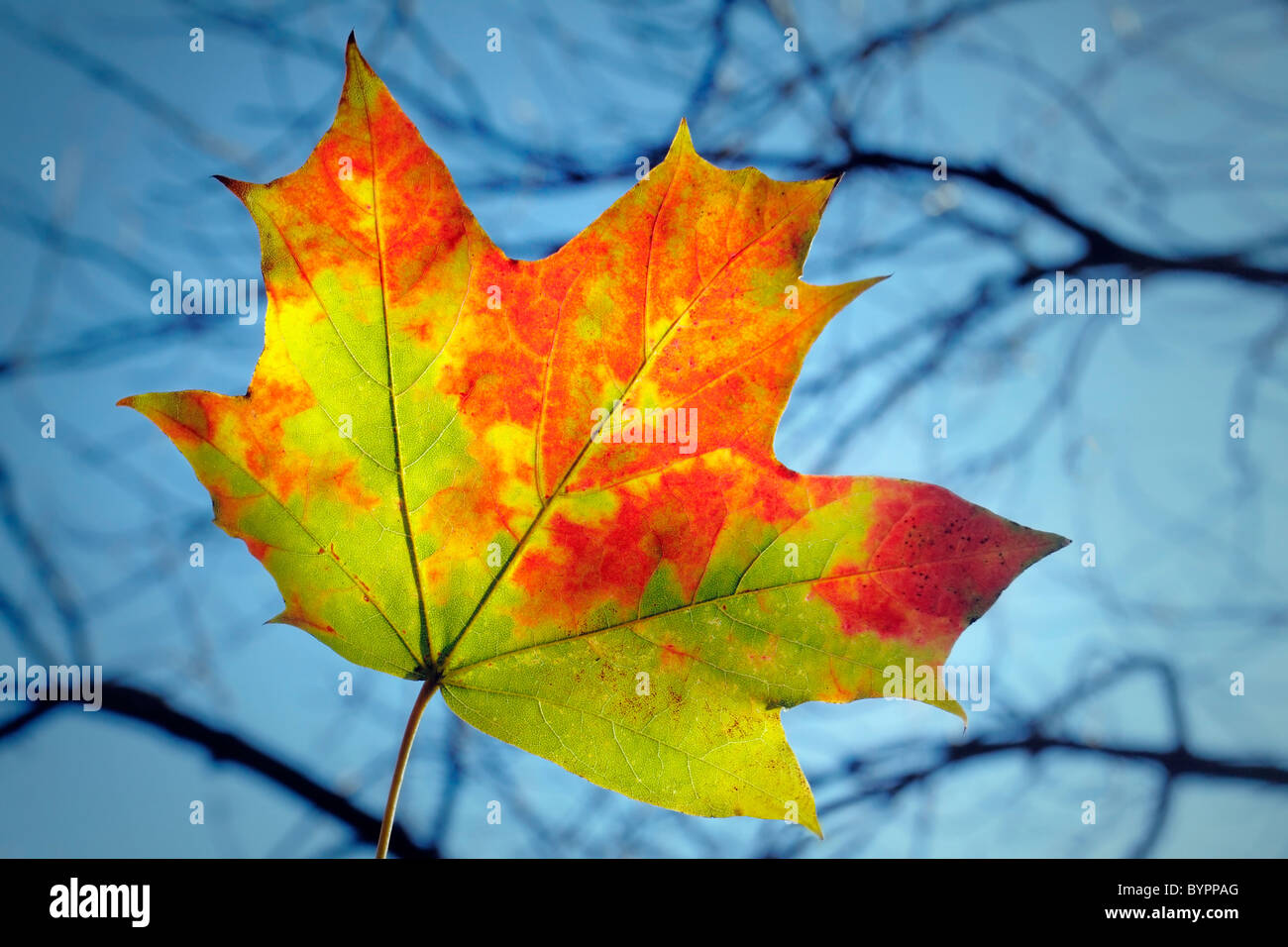 lonely leaf - Stock Image