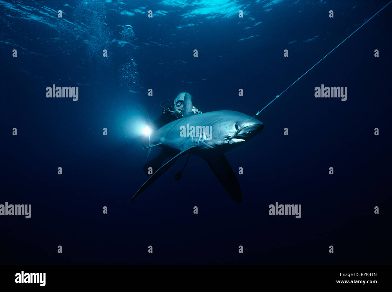 thresher shark coloring page.html