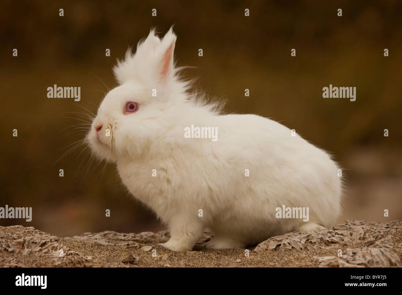 White bunny rabbit on rock - Stock Image