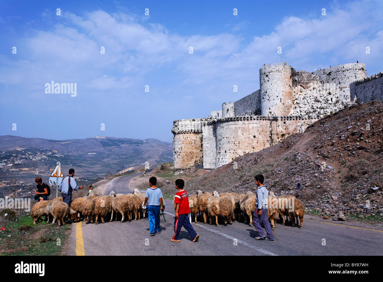 Sheep outside the crusader castle Krak Des Chevaliers, Syria - Stock Image