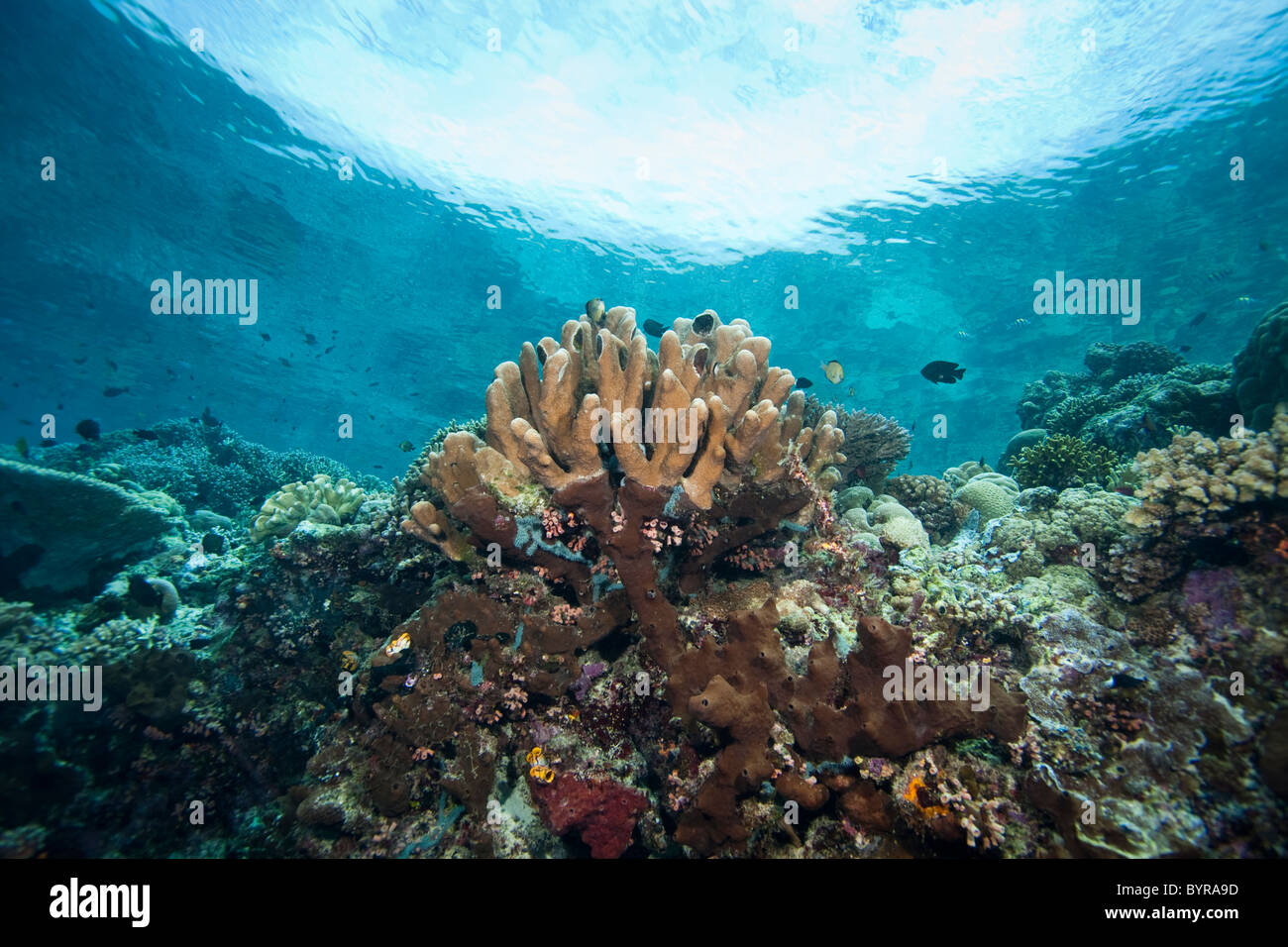A tropical coral reef off Bunaken Island in North Sulawesi, Indonesia. - Stock Image